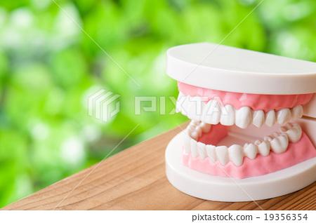 Dental model green background 19356354