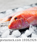 Red mullet fish on ice cubes Black stone board 19362926