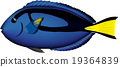 벡터, 돌리, 바닷물고기 19364839