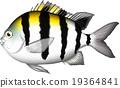 벡터, 물고기, 생선 19364841