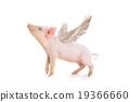 pig 19366660