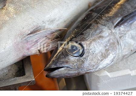 tuna fish 19374427
