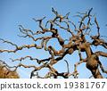 รูปร่างของต้นไม้เฟิร์น 19381767