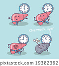 overwork liver 19382392