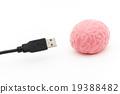 大腦 頭腦 電纜 19388482