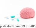 大腦 頭腦 內臟 19388485