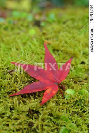 Fallen leaves 19391744