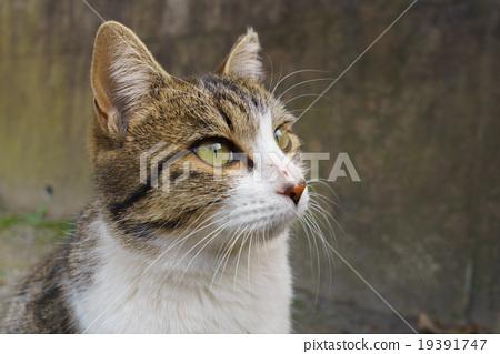 Cat 19391747