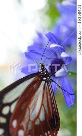 Blue flowers and butterflies 19398431
