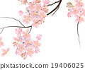 Cherry blossom  flowers on white background waterc 19406025