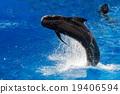 whale, pilot, sea 19406594