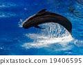 whale, pilot, sea 19406595