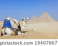 피라미드, 유적, 낙타 19407667