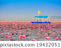 Red lotus, Nonghan, Udonthani, Thailand 19432051