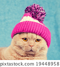 Portrait of cat wearing a knitted cap with pompom 19448958
