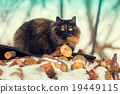 Cat sitting outdoors in winter on firewood 19449115