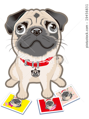 Pug dog 19456831