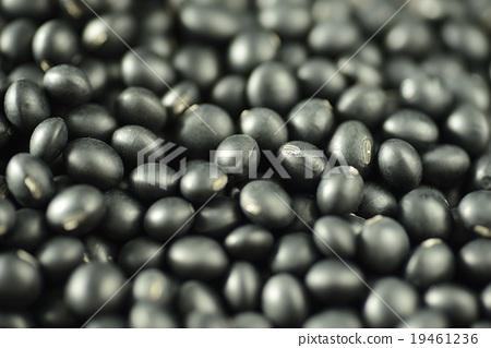 Black bean 19461236