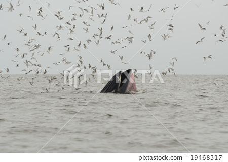 whale 19468317