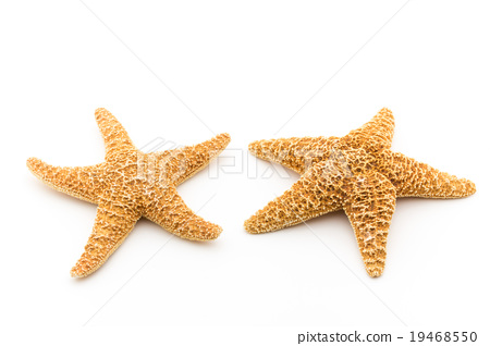 Starfish 19468550
