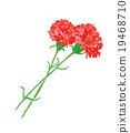 母亲节 康乃馨 水彩 19468710