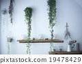 有機 天然 植物 19478429