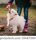 animal, dog, pet 19487084