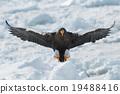 野生鳥類 野鳥 動物 19488416