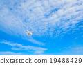 藍天 飛行 航班 19488429