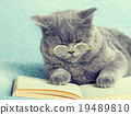 Cat wearing glasses lying on the book 19489810