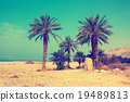 Palm trees against sea in dessert 19489813