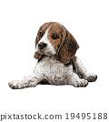beagle hand drawn 19495188