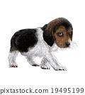 beagle hand drawn 19495199