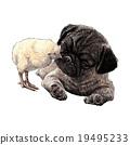 Pug dog ang a chick 19495233