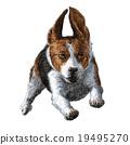 running beagle 19495270