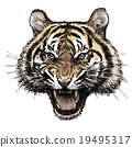 head of angry tiger hand drawn 19495317