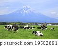 mountain, fuji, mt 19502891