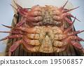 大闸蟹 螃蟹 蟹 19506857