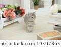貓 貓咪 小貓 19507865