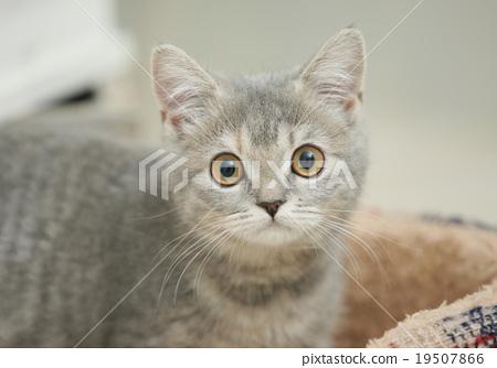 毛孩 貓 貓咪 19507866