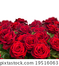 bouquet of dark  red roses  close up 19516063