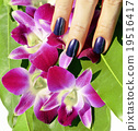 manicure, nail, orchid 19516417