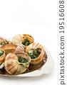 食用蝸牛 蝸牛 法國食品 19516608