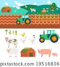 farm, vector, agriculture 19516836