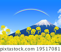 field of rapeseed, mountain fuji, mt fuji 19517081