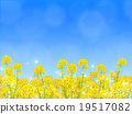 field of rapeseed, rape, rape blossoms 19517082