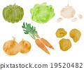 蔬菜 水彩画 根菜类 19520482