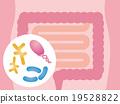 large, intestine, bowel 19528822