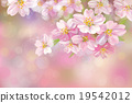 Vector blossoming sakura tree background.  19542012