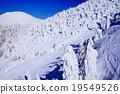 覆有霜的樹 冰霜覆蓋的樹木 太莫有時散 19549526
